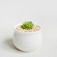 Little Barrel Shape White Ceramic Succulent Planter-Minimalist Cacti Pot-Ceramic Planter&Pot