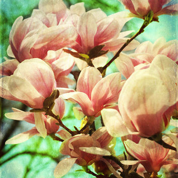 Magnolia Tree Spring Art Print - Pink Aqua Green Flower Floral Shabby Chic Vintage Home Decor Nursery Girls Room Photograph