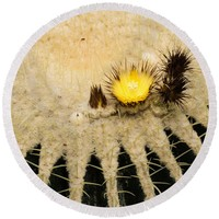 Fascinating Cactus Bloom - Soft And Fragile Among The Thorns Round Beach Towel for Sale by Georgia Mizuleva