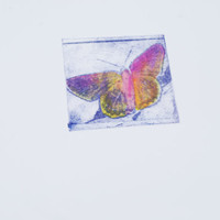 Butterfly Etching, Watercolor wash, Small art print, Pink and Purple butterfly
