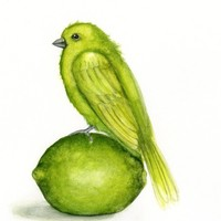 Green Bird on a lime - print from original painting