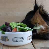 Guinea Pig Food Pet Bowl - Guinea Pig Train Design