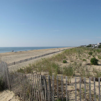 Delaware - Eastern Shore (Beachwood Vetiver)
