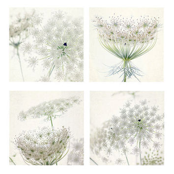 Four Queen Anne's Lace Photographs, White Floral Art Print, Still Life Wall Decor, Botanical Print, Shabby Chic