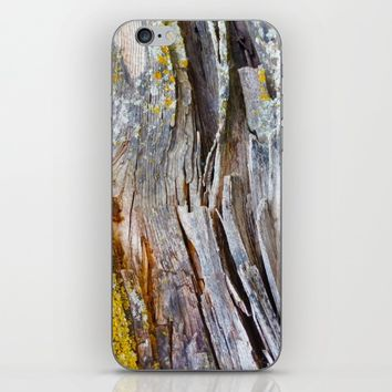 Relic of the Forest iPhone & iPod Skin by Heidi Haakenson