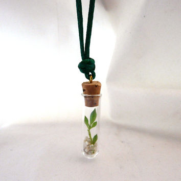 Living Plant Necklace -string of pearls test tube