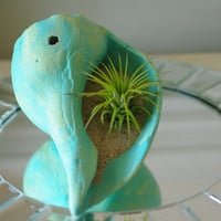 Beach Decor Whelk Seashell Air Plant - Patina Blue and Bright Green