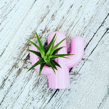 1 Cactus Air Plant magnet w/airplant, Air Plant Holder, Air Planter,Cactus decor,Indoor Planter, Desk Planter,