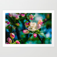 Crabapple flower and buds Art Print by Digital2real