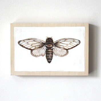 cicada original art woodburning insect by TheHauntedHollowTree