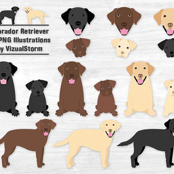 Labrador Retriever Clipart Black Lab Chocolate Lab Yellow Lab Labrador Puppy Labrador Illustration Labrador Dog Clipart Graphics Lab Puppies