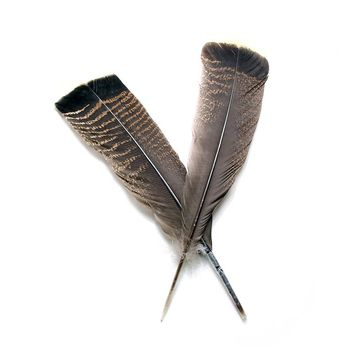 5pcs/lot High-quality natural Wild plumage feather 10-12inch goose turkey Tail feather plumes eagle feather Cloth DIY Decoration