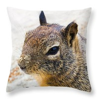 """Sandy Nose Squirrel 14"""" x 14"""" Throw Pillow for Sale by Priya Ghose"""