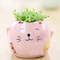 Cute Mini Cat Potted Plants by 99 Crowncat