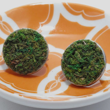 Moss Earrings, Terrarium, Terrarium Jewelry, Living Plant Jewelry, Terrarium Earrings, Eco Friendly, Garden Gift