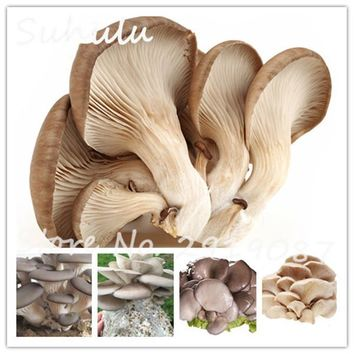 Organic Delicious Giant Mushroom Seeds 50 Particles Rare Green Vegetable Seeds Easy To Grow in Garden and Courtyard Plants
