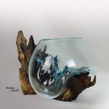 Hand-Blown Molten Glass On Driftwood Base; Sculpted Terrarium/Vase/Fish Bowl Eco Indoor Planter Unique One Of A Kind Wood Root 11.25x7.5""