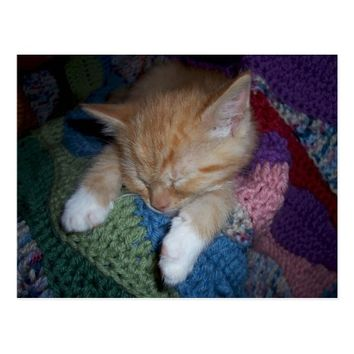 Sleeping Ginger and White Kitten Postcard