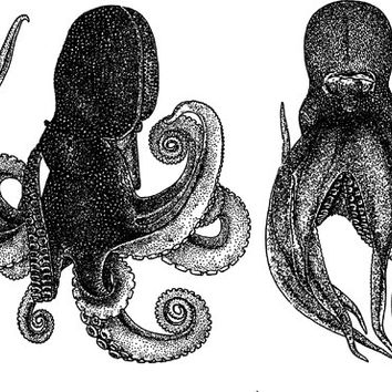 2 octopus sealife png clip art Digital stamp ocean animals graphics downloads printables