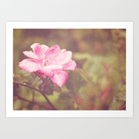 A Rose By Any Other Name... Art Print by Dena Brender Photography