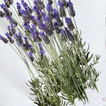 Lavender from the garden