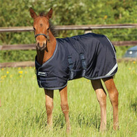 Amigo® Foal Blanket - Foal & Newborn Sizes from SmartPak Equine