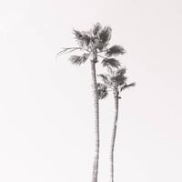 California Palm Tree Photography, Black and white Los Angeles Bohemian Home Decor art Boho Travel photo Poster Size