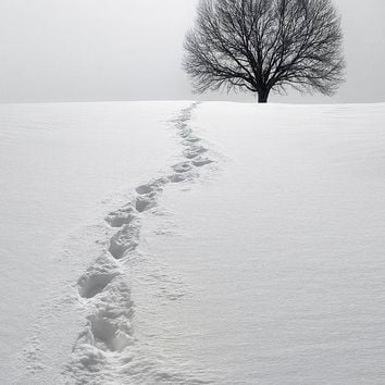 Snowy Path Photograph by Diane Diederich - Snowy Path Fine Art Prints and Posters for Sale