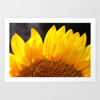Sunrise Sunflower Art Print by David Cutts