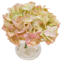 "7"" Hydrangeas in Bubble Vase, PinkTHE FRENCH BEE"