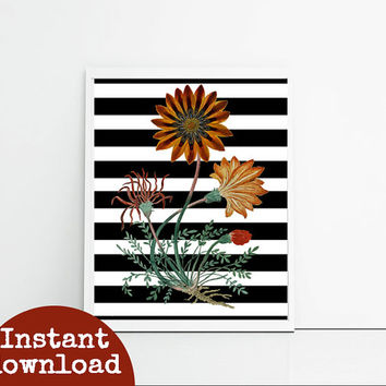 Vintage illustration botanical orange floral, digital print, black and white stripes, floral art print, cute girly bedroom decor download.