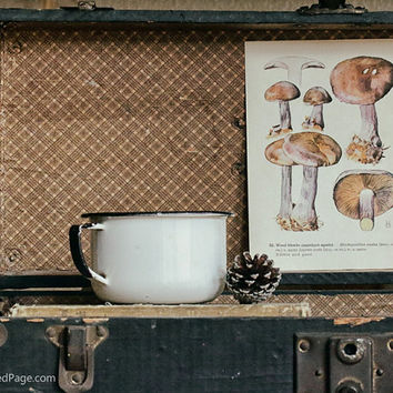 Vintage Mushroom Print, Art Illustration, Kitchen Decor, Rustic Home Decor, Double Sided Aged Page