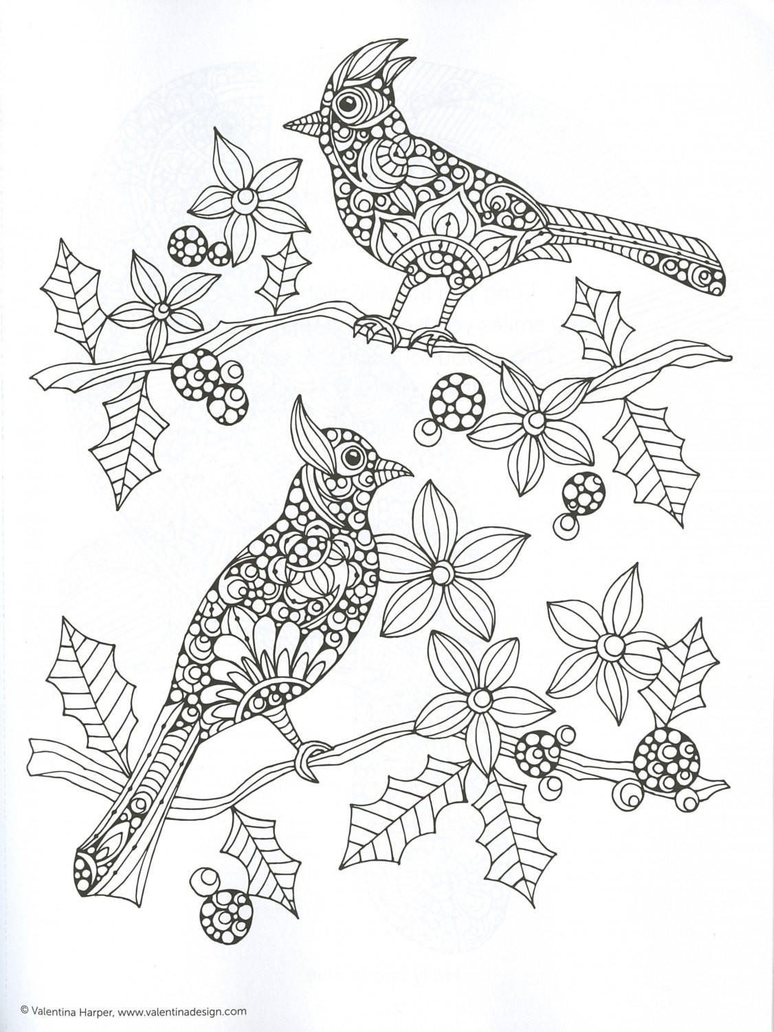full_size creative coloring birds adult coloring from kay's crochet on creative coloring birds