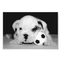 Soccer Puppy English Bulldog from Zazzle.com