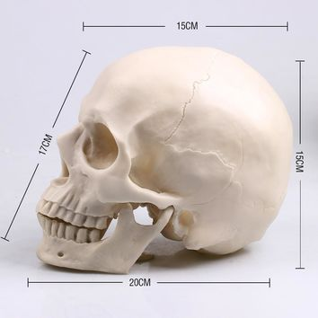Skull Skulls Halloween Fall P-Flame 1:1 Resin  Sculpture Education And Painting dedicated Medical Model Realistic Lifesize Home Decoration Accessories Calavera