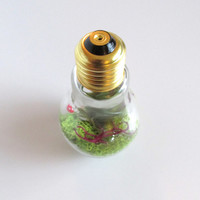 Glass Lightbulb Terrarium with moss, air plant & tiny ceramic red polka dot mushroom
