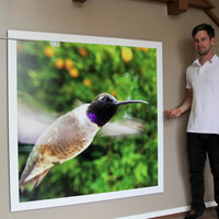 Bird Photo Booth - Experience nature like never before.
