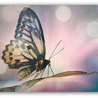 Butterfly photography print - Enchanted Purple Art - Magical art