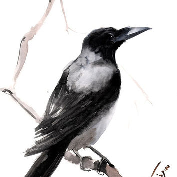 Hooded Crow, original watercolor painting, 12 X 9 in, black white gray crow art