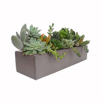 Succulent Mix in Concrete Grey Pot