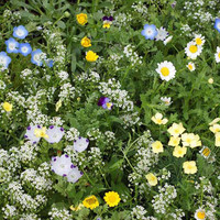Alternative Lawn Mix Flower Seeds - Non-GMO, Open Pollinated, Untreated, Heirloom, Native, Flower Seeds