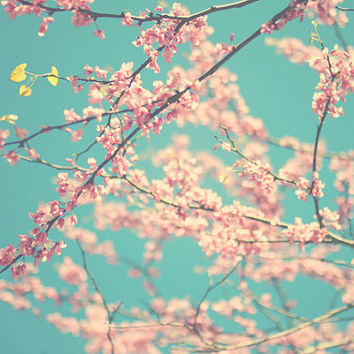 Spring, blossoms, pink, teal, floral, fine art photography