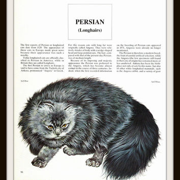 Cat Art Print 9.5 x 11 Blue Persian Longhair Unframed Lithograph Piero Cozzaglio, Only 1 in Stock