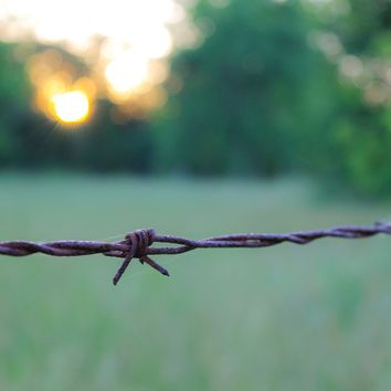 Barbed Wire Portrait Photograph Art Print