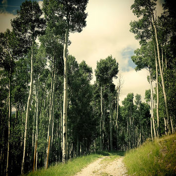 Summer Aspen Road - Photography