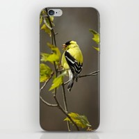 Goldfinch in Song iPhone & iPod Skin by Christina Rollo | Society6