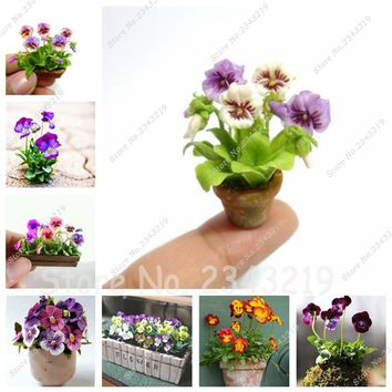 2017 New! 50 Pcs Bonsai Pansy Seeds Mini Flower Seeds ,Fun Office Desk DIY Yard Potted Plant for Home & Garden Free Shipping