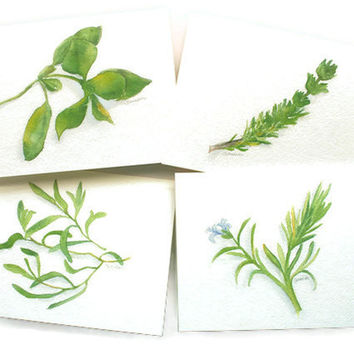 Watercolor Herbs Card Set of 4