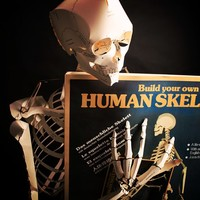 Build Your Own Life Sized Human Skeleton at Firebox.com