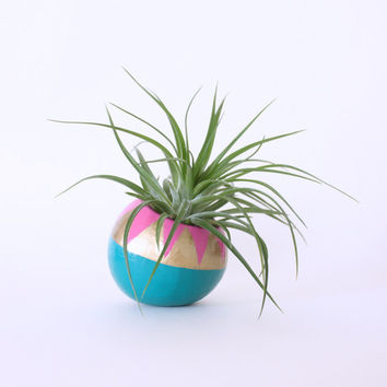 Air Plant Planter with Air Plant - Teal, Mulberry & Gold Triangles